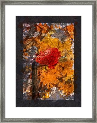 Snail Sory - S20-01bb Framed Print by Variance Collections