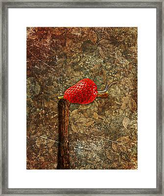 Snail Story - S01-03a Framed Print by Variance Collections