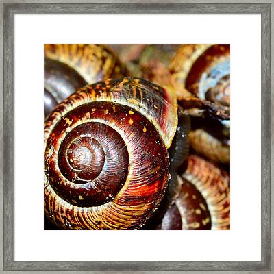 Snails In Closeup  Framed Print
