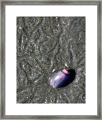 Snail's Pace Framed Print by Lisa Phillips