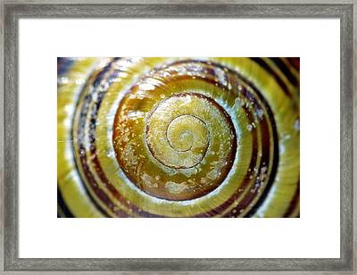 Snails Shell In Closeup Framed Print