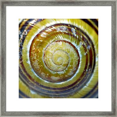 Snails Shell Macro Framed Print
