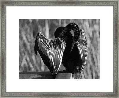 Framed Print featuring the photograph Snake Bird by Daniel Woodrum