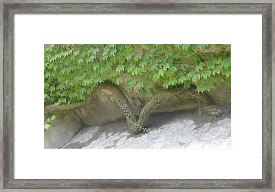 Snake Branch Framed Print by Nora Boghossian