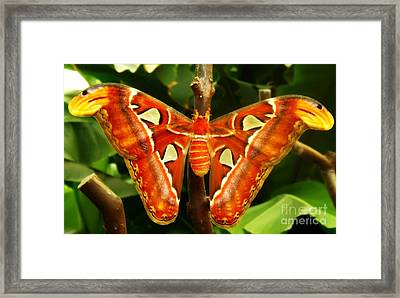 Framed Print featuring the photograph Snake Head by Clare Bevan