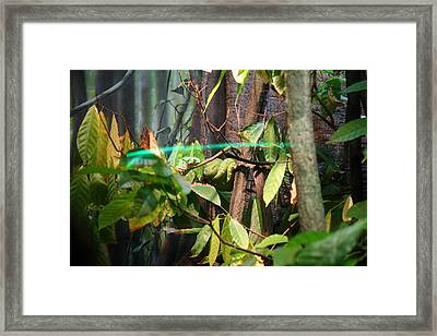 Snake - National Aquarium In Baltimore Md - 12121 Framed Print by DC Photographer