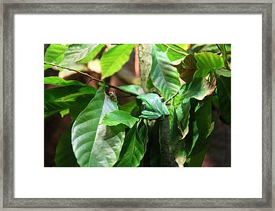 Snake - National Aquarium In Baltimore Md - 12122 Framed Print by DC Photographer