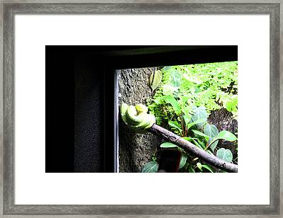 Snake - National Aquarium In Baltimore Md - 12123 Framed Print by DC Photographer