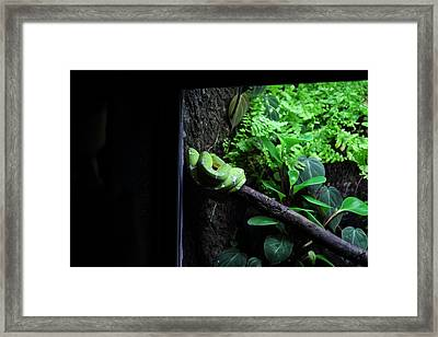 Snake - National Aquarium In Baltimore Md - 12124 Framed Print