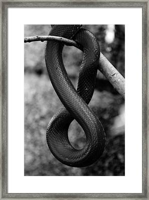 Snake Springs Eternal Framed Print