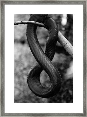 Snake Springs Eternal Framed Print by Rebecca Sherman