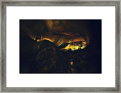 Snake Framed Print by Valarie Davis