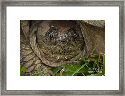 Framed Print featuring the photograph Snapper by Randy Bodkins