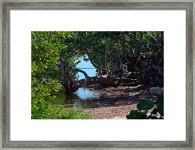 Snead Tree Framed Print by Ryan Burton