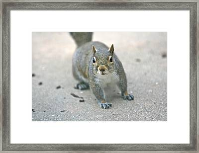 Sneak Framed Print by Debbie Sikes