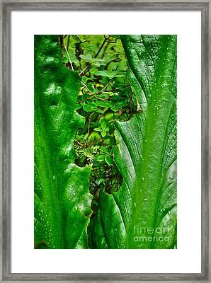 Framed Print featuring the photograph Sneak Peek by Cynthia Lagoudakis