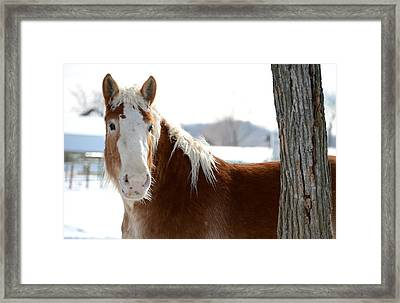 Sneak Peek Framed Print