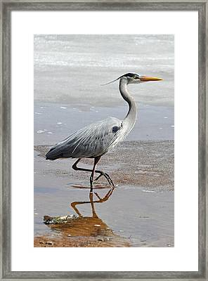 Sneaky Pretty Framed Print by RJ Martens