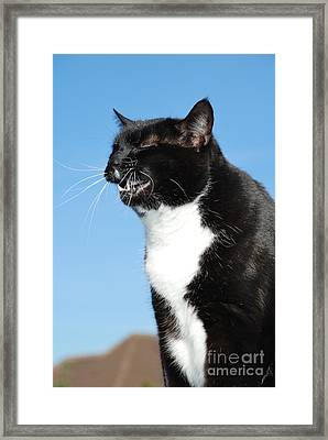 Sneezing Cat Framed Print