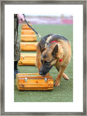 Sniffer Dog Championships Framed Print