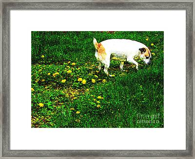 Sniffin The Dandelions Framed Print by Minding My  Visions by Adri and Ray