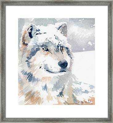 Snow Wolf Framed Print by Sean Parnell