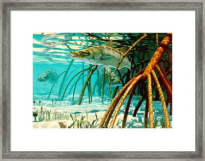 Snook In The Mangroves Framed Print