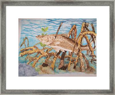 Snook Original Pyrographic Art On Paper By Pigatopia Framed Print by Shannon Ivins