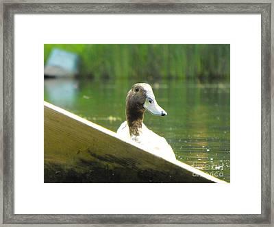 Snooping Duck Framed Print by Erick Schmidt