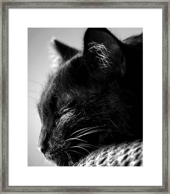 Snooze Framed Print by Camille Lopez