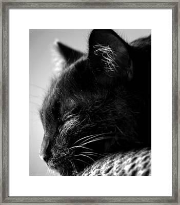 Snooze Framed Print