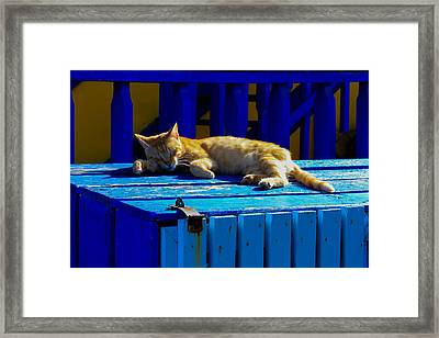 Snoozing In The Sun Framed Print