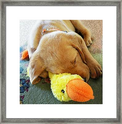 Snoozing With My Duck Fell Asleep On A Job Puppy Framed Print