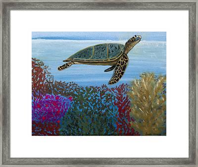 Snorkeling Maui Turtle Framed Print