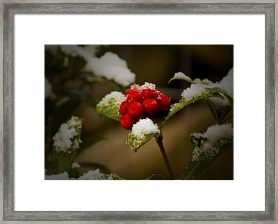Snow And Berries Framed Print by Ron Roberts