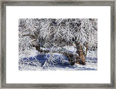 Snow And Ice Covered Tree Framed Print