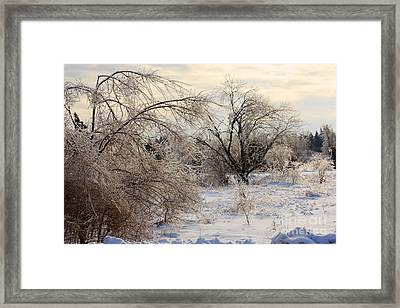 Snow And Ice Covered Trees Framed Print