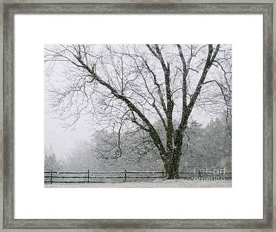 Snow And Pecan Tree Framed Print