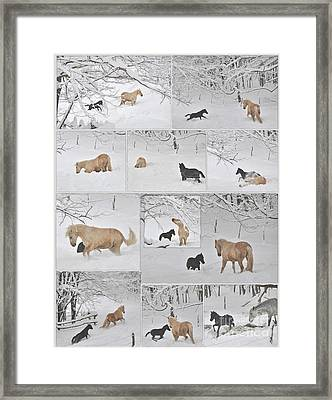 Snow Angels Paso Fino Style Framed Print