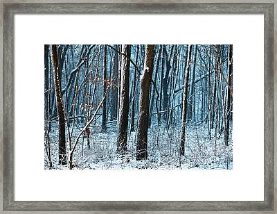 Snow At Dusk Framed Print by Tim Michael