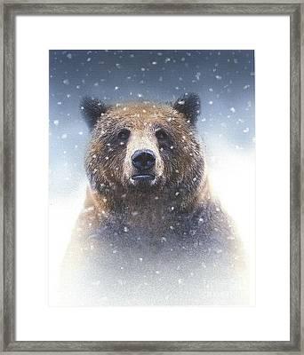 Snow Bear Framed Print by Robert Foster