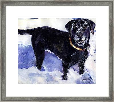 Snow Belle Framed Print by Molly Poole