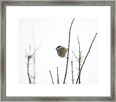 Snow Bird 2 Framed Print by Rebecca Cozart