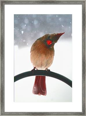 Framed Print featuring the photograph Snow Bird by Diane Merkle