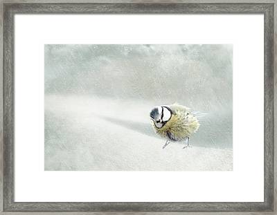 Snow Bird Framed Print by Heike Hultsch