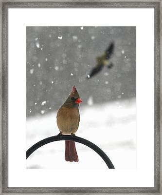 Snow Bird II Framed Print by Diane Merkle
