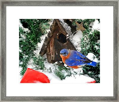 Snow Bluebird Christmas Card Framed Print