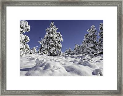 Snow Bomb Framed Print by Tom Wilbert