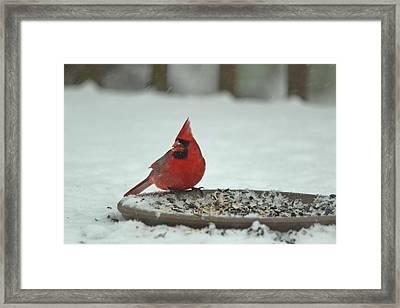 Snow Cardinal Framed Print