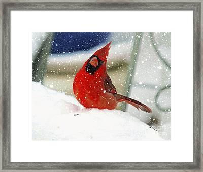 Snow Cardinal Framed Print by Yumi Johnson